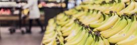 Banane : choisissez entre exploitation inhumaine et production éco-responsable