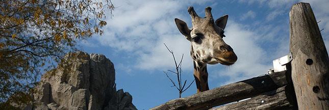 Le gouvernement de Buenos Aires a nationalisé le zoo pour le transformer dans un éco-parc