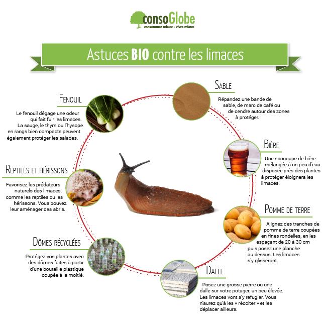 Astuces anti limaces