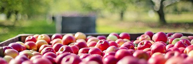récoltes 2016 fruits