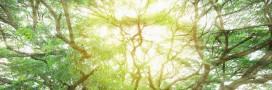 Environnement: la couche d'ozone se répare progressivement