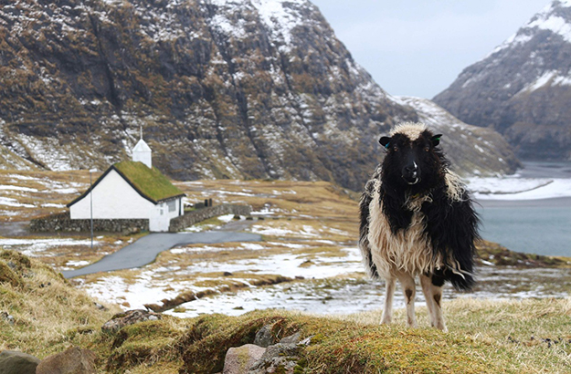 îles feroé moutons paysage