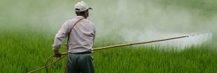 Exposition aux pesticides : plus d'un million de personnes touchées, réglementation inefficace