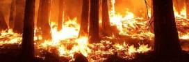 La multiplication des incendies, témoin des changements climatiques
