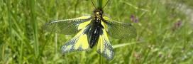 Loi pour la reconquête de la biodiversité: adoption après 4 années d'hésitation