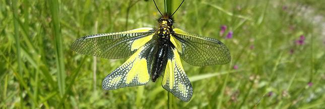loi-biodiversite-ban
