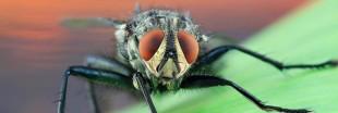 Que valent les bougies anti-moustiques et anti-mouches ?