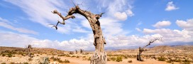 La désertification gagne du terrain en Espagne