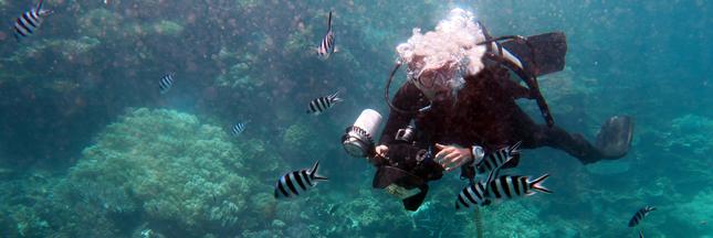 La Grande barrière de corail Australie Queensland