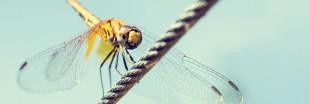 Biodiversité : il faut tenir compte de la spéciation due à la pression humaine
