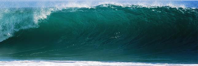 Les océans envahis par des bactéries tueuses ?