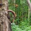 Quand la nature reprend ses droits : les plus belles photos