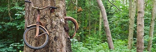 Quand la nature reprend ses droits: les plus belles photos