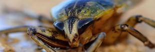 Des blattes à la maison ? Découvrez nos astuces pour vous en débarrasser