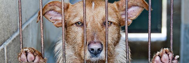 refuge, animal abandonné, chien
