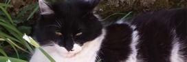 Ils retrouvent leur chat disparu depuis huit ans