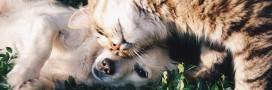 Protégez aussi vos animaux contre tiques et puces