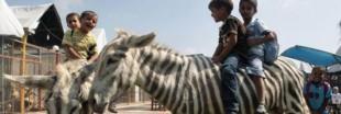 Gaza : le pire zoo du monde perd ses derniers animaux