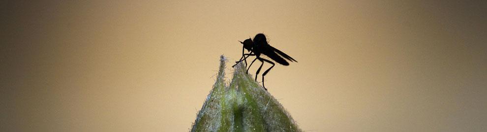insectes-maison-dossier-ban
