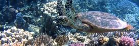Saisie record de coraux, peaux et os d'animaux protégés