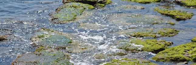 Une algue bio-pesticide découverte par une société bordelaise