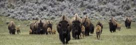 États-Unis: les Sioux manifestent contre la construction d'un oléoduc géant
