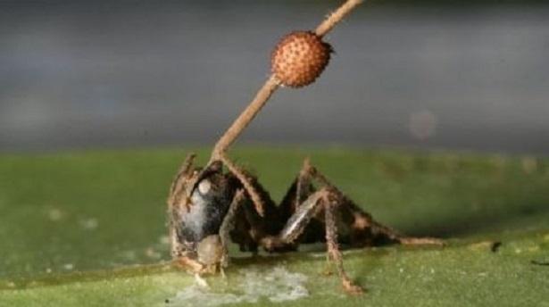 champignon pesticide