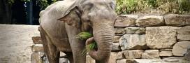 Une maison de retraite pour éléphants ouvre ses portes en France