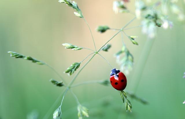 ladybug-1478029_640