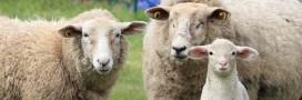 Faut-il arrêter d'acheter de la laine?