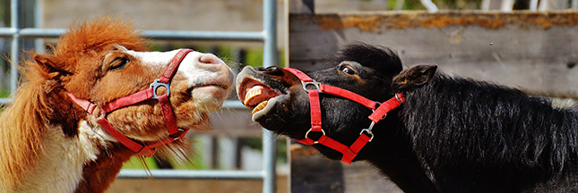 les-chevaux-savent-communiquer-ban