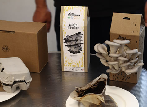 Kit DIY de champignons, les pleurotes gris