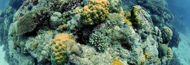Grande barrière de corail : l\'Australie face à ses contradictions