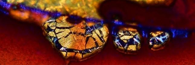 L'insoupçonnable beauté du monde capturée au microscope