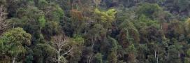 La déforestation au Brésil serait largement sous-estimée