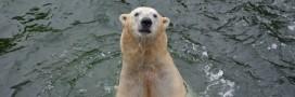 Chine: l'ours du centre commercial inquiète les ONG