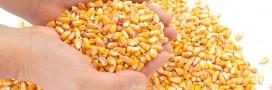 Rappel produit: maïs sans Sucres Ajoutés, Bio Village Leclerc