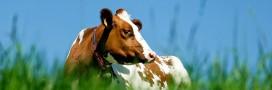 98% des Français sont sensibles au bien-être animal