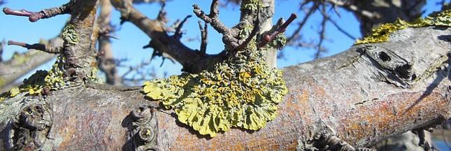 Lichens et réchauffement climatique: peuvent-ils nous aider ?