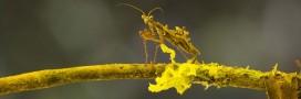 Biodiversité: 10% des espèces mondiales vivent en France