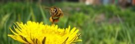 Lot-et-Garonne : la perte de pollinisateurs se fait sentir