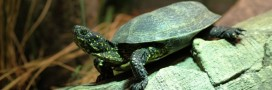 10 conseils pour adopter une tortue et en prendre soin