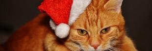 Les dangers de Noël pour vos chiens et chats