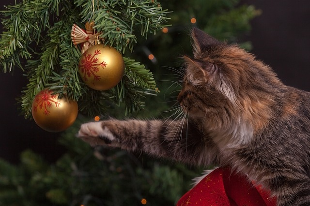 chat intoxication noel