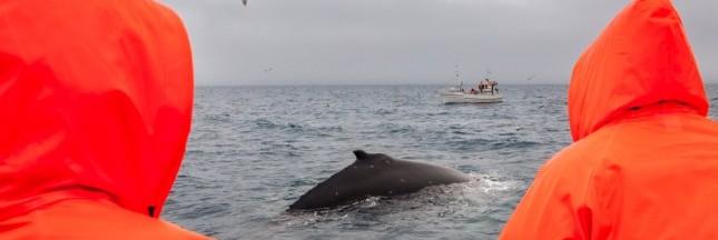 Des militants en route pour contrer les baleiniers japonais