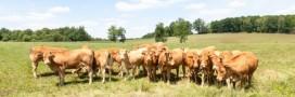 Crise agricole : Bruxelles veut « minimiser l'impact » en France