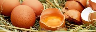 Élevages alternatifs : les producteurs d'oeufs demandent un investissement de la distribution