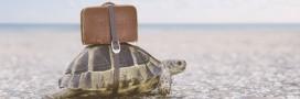 Trafic : 6.000 tortues sauvées en Inde