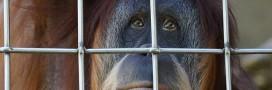 Trafic d'espèces sauvages: l'Europe est en première ligne
