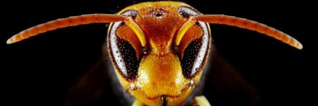 L'introduction des espèces invasives explose